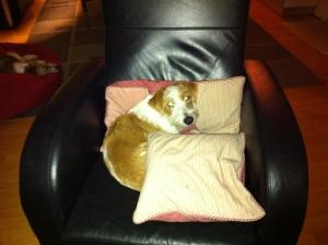 Maggie i husets bedste stol